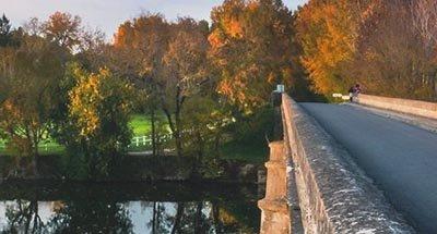 Bridge and autumn leaves