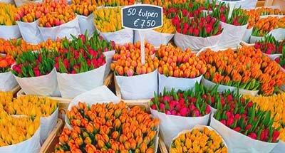 Tulips in Dutch market, Netherlands