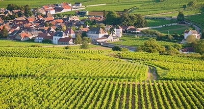 Vineyards of Burgundy