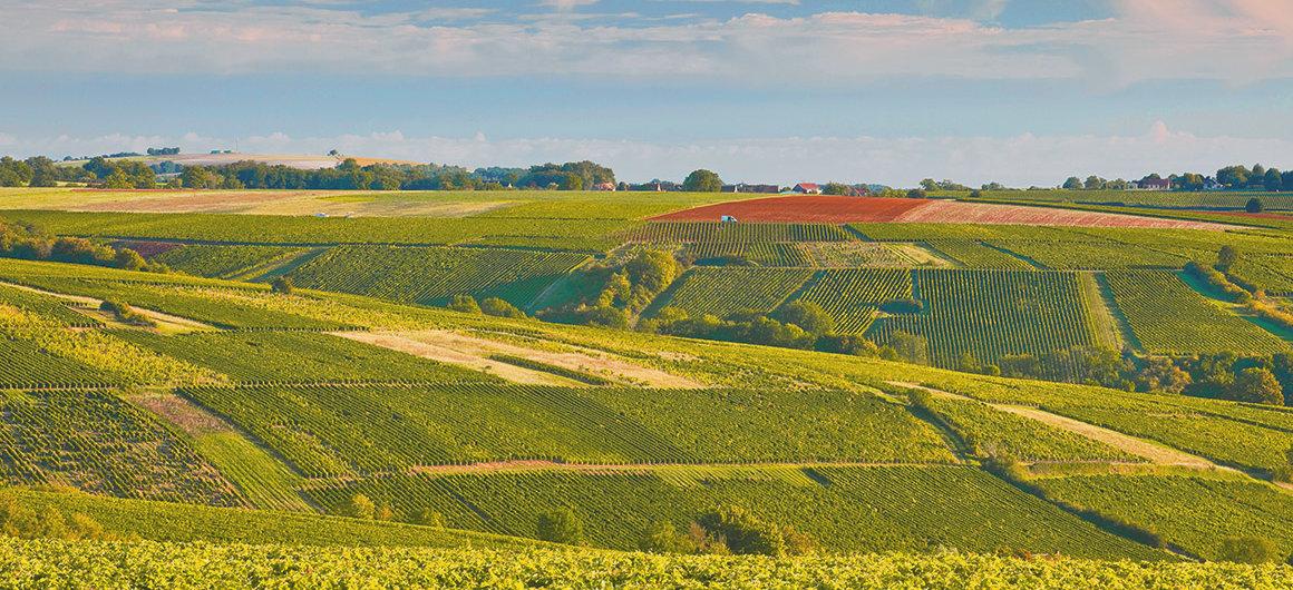 Vineyards of Sancerre