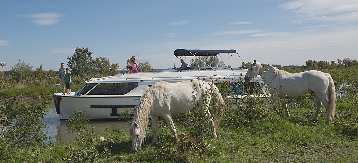 Le Boat vision and wild horses