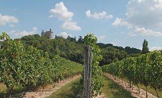 Buzet Vineyard, Aquitaine