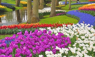 Keukenhof flower garden in Lisse